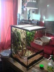 large glass vivarium for sale,  would suit chameleon £150 ono