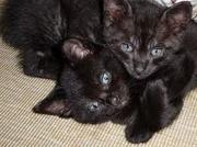 Adorable twin femALE KITTENS fir sale £500 for both